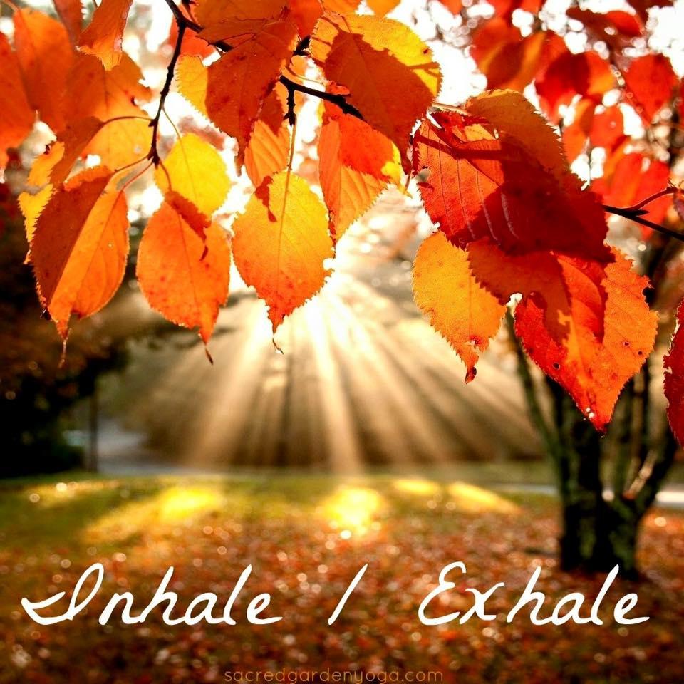 ease into autumn don u0027t fall u2013 sacred garden yoga